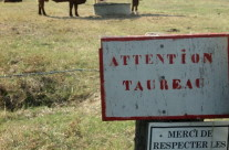 Attention! Taureau!