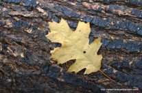 Photo Friday: Autumn leaves