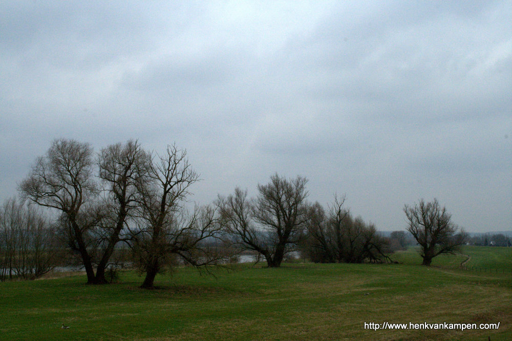 Willows along the IJssel river