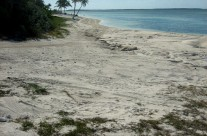 Wordless Wednesday: Deserted beach