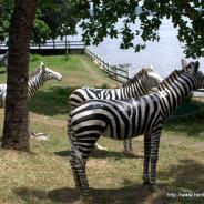 Wordless Wednesday: Zebra statues