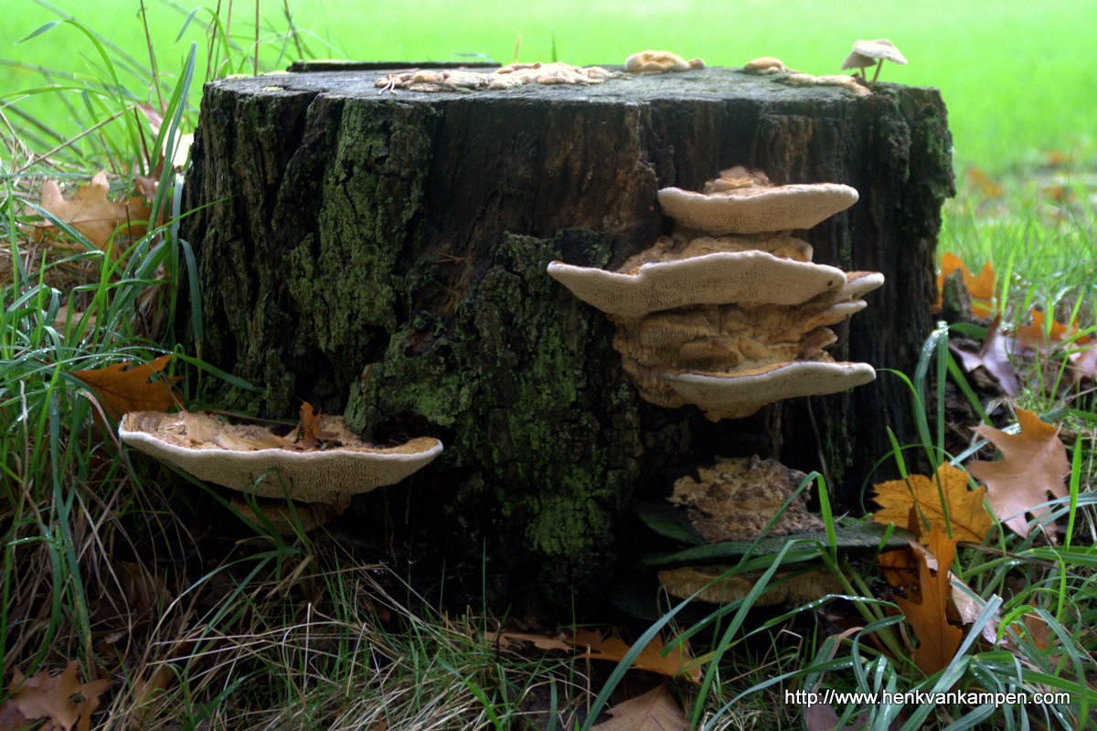 Fungi on a tree trunk