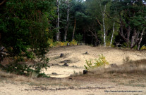 Sand dunes at the forest edge