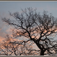 Wordless Wednesday: Tree