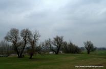 Willows along a river